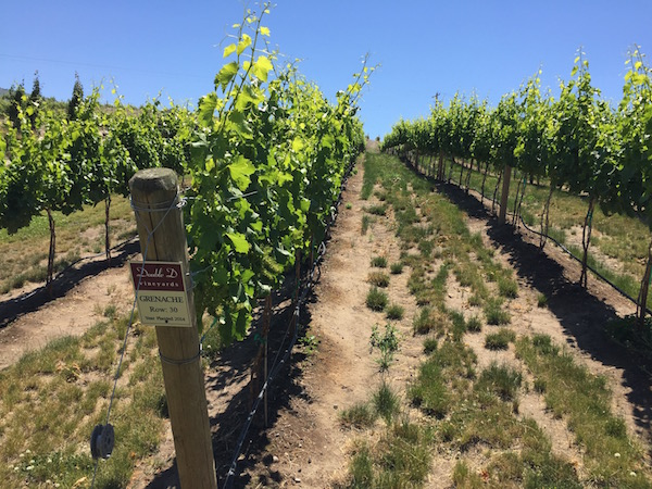 Three-year-old vines of Grenache reach for the spring sun at Double D Vineyards, an estate planting along the Columbia River for Rocky Pond Winery in Orondo, Wash.