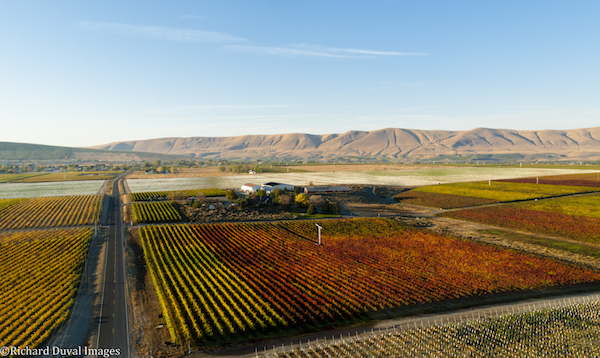 The first lemberger in Washington was planted in 1976 at Kiona Vineyards & Winery.