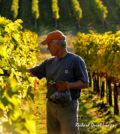 duane-wollmuth-vineyard-feature