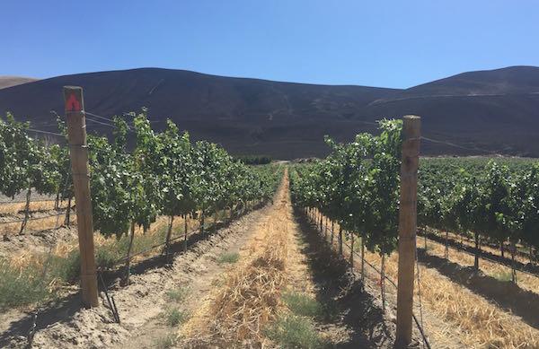 kiona fire threatens skyfall vineyard.