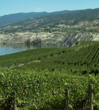 The Naramata Bench is one of the most picturesque growing regions in British Columbia