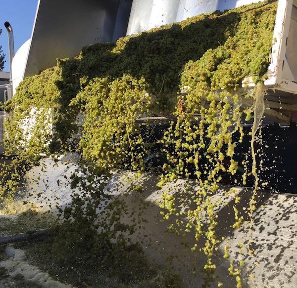 Sauvignon Blanc Bacchus Vineyard