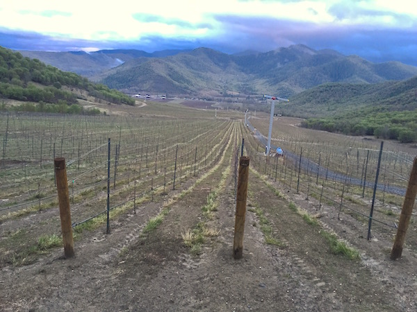Del Rio Vineyards in Gold Hill, Ore., expanded its plantings to 305 acres this past winter, stretching to 1,600 feel in elevation. The new vines will give winemaker Jean-Michel Jussiaume six clones of Pinot Noir to work with.