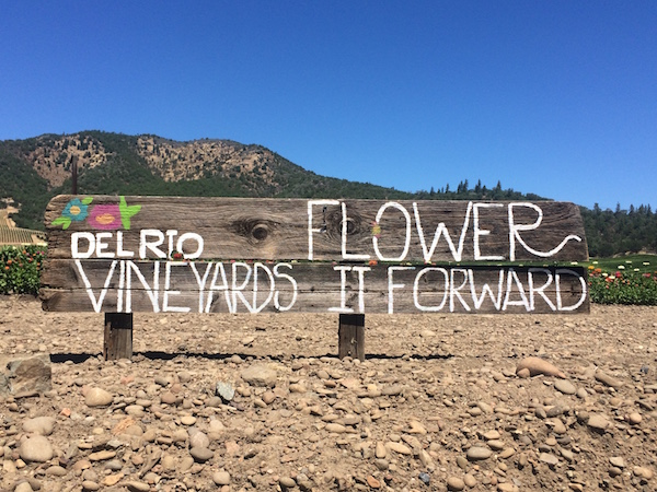 Del Rio Vineyards is one of Oregon's largest vineyards at 305 acres, and it recently planted long rows of zinnias for guests to pick for free and share with friends or those in need of a pick-me-up. (Photo courtesy of Del Rio Vineyards)