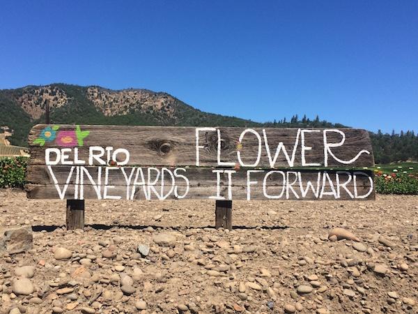 del-rio-vineyards-flower-it-forward