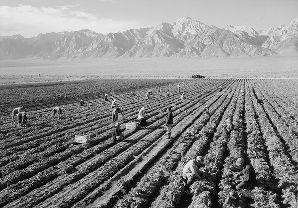 Manzanar internment camp