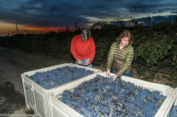 USA, Washington,Walla Walla. Harvest 2016 is the first harvest for ALUVÉ winery with grapes from Seven Hills.