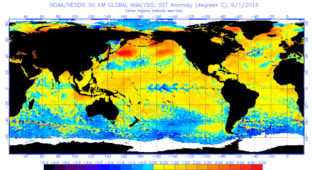 The global sea surface temperatures (°C) for Sept. 1, 2016. (image from NOAA/NESDIS)