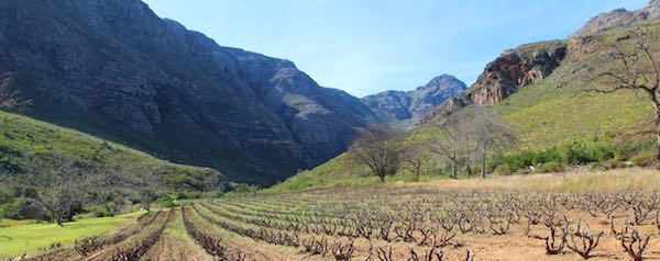 Quinta Essentia vines in stellenbosch