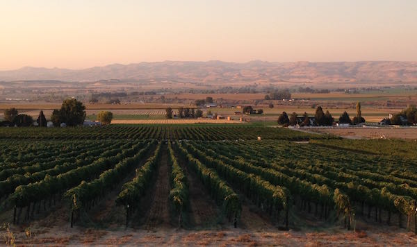 Idaho wine industry, williamson vineyard