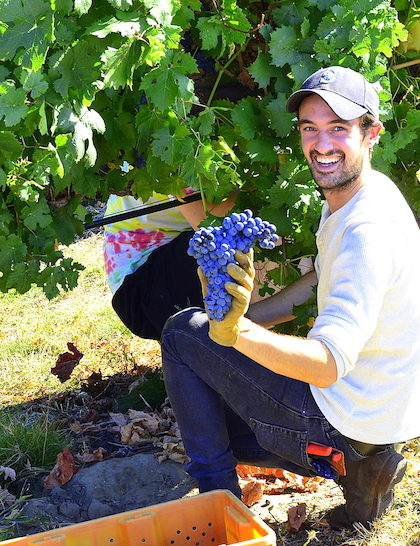 Sager Small, whose family owns and operates Woodward Canyon Winery, shows off a cluster of Carmenere harvest for Walla Walla Community College's winemaking program. (Photo by Abra Bennett/Great Northwest Wine)