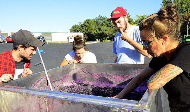 walla-walla-college-cellars-carmenere-team-sager-small-melanie-kinchen-will-thompson-ari-nickolisen