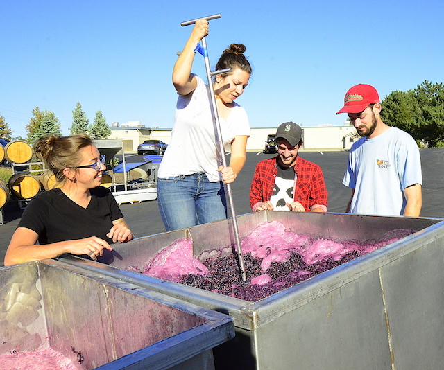 Melanie Kinchen performs punchdowns for the 2015 Carménère team of Walla Walla Community College's winemaking program, which includes, left to right, Ari Nickolisen, Sager Small and Will Thompson. (Photo by Abra Bennett/Great Northwest Wine)