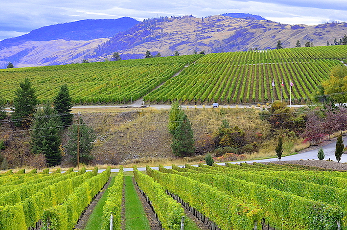 The tasting room at Gehringer Brothers Estate Winery offers a view of their vines and neighboring vineyards at the Golden Mile Bench, a sub-appellation of the Okanagan Valley.