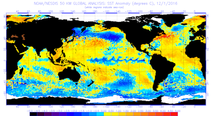 Global sea surface temperatures in Celsius for the period ending Dec. 1, 2016 (Image from National Oceanic and Atmospheric Administration/National Environmental Satellite, Data, and Information Service)