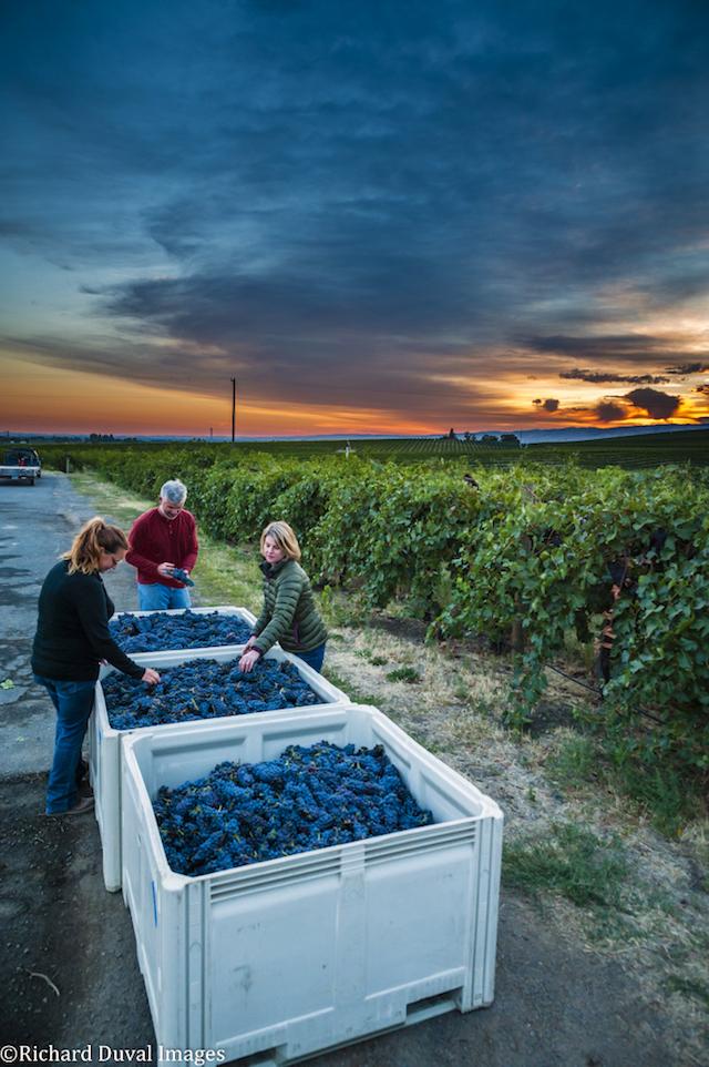 aluve-winery-2016