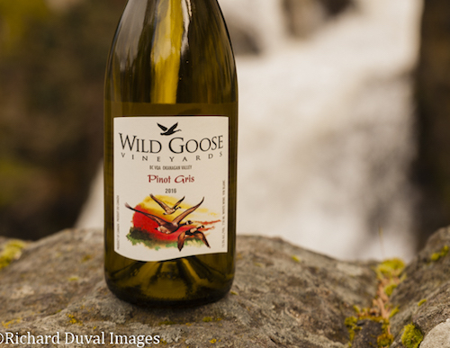 wild goose pinot gris copy - Wild Goose tops 5th Cascadia Wine Competition