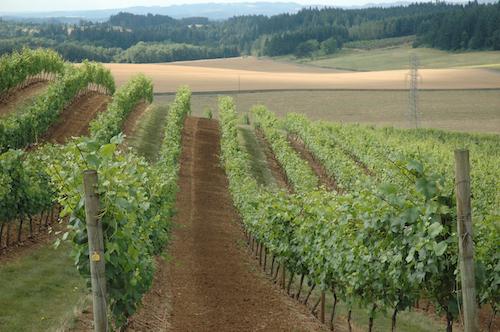 Oregon Pinot Noir 1 - Oregon's Pinot Noir legacy