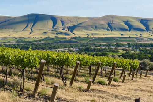 klipsun red mtn - Washington wine lovers should seek out big Petit Verdot