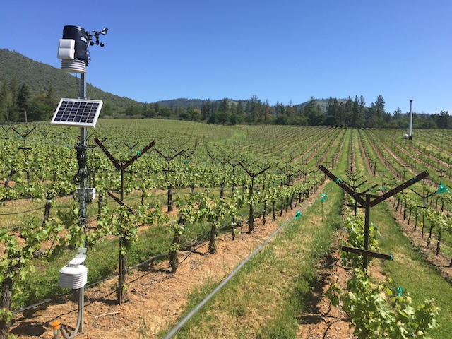 mae vineyard quady north applegate valley 5 10 2017 - 2017 vintage tracking just ahead of cool vintages