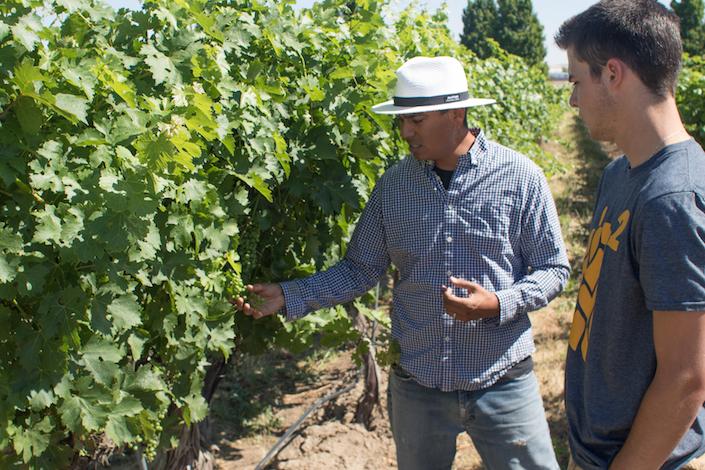 joel perez jake sprenger vineyard photo by david walk walla walla community college - College Cellars vineyard instructor Joel Perez recruits technology