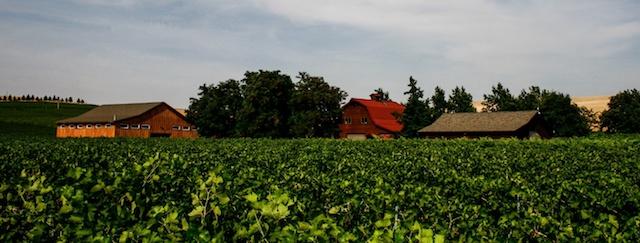 cut bank vineyard walla walla vintners - Historic Walla Walla Vintners set to release first estate wines
