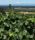 elton vineyard feature 120x134 - Oregon wine industry tops 725 wineries, 30,000 acres of vines