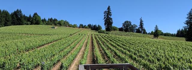lenne estate vineyard yamhill oregon ellen landis photo - Lenné Estate exudes sophistication, sense of place with Pinot Noir