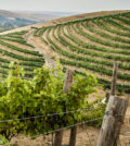 elevation vineyard walla walla valley wine alliance richard duval images featured 120x134 - Walla Walla Valley vines branch out nearly 3,000 acres