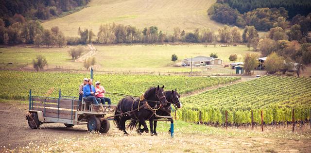 illahe vineyards doc bea vineyard - Illahe Vineyards goes canoe for Pinot Noir delivery to PDX