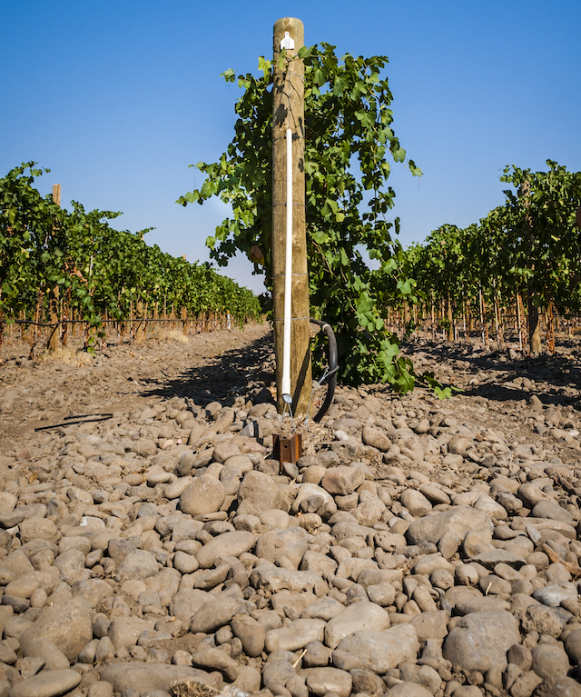 Walla Walla Valley vines branch out nearly 3,000 acres - Great