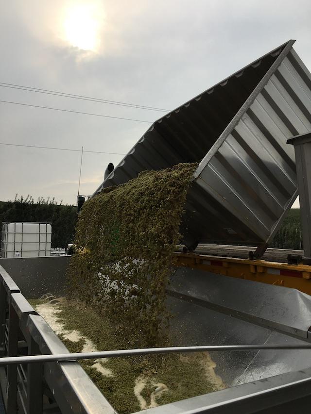 treveri-cellars-harvest-2018
