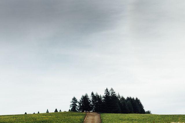 zena crown vineyard crown trees - Gehringer tops Great Northwest Invitational Wine Competition again