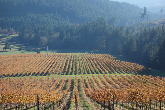 chalice vineyard iris vineyard photo - Oregon Pinot Noir shines at first New Orleans International Wine Awards