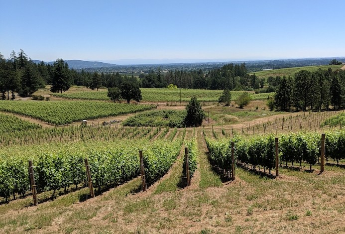 vidon vineyard tempranillo block ellen landis photo - Vidon Vineyard melds science, craftsmanship into Oregon wine