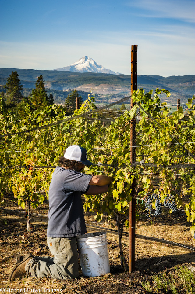 richard duval images 09 21 18 5985 - Photojournalist takes lens to Pacific Northwest 2018 harvest