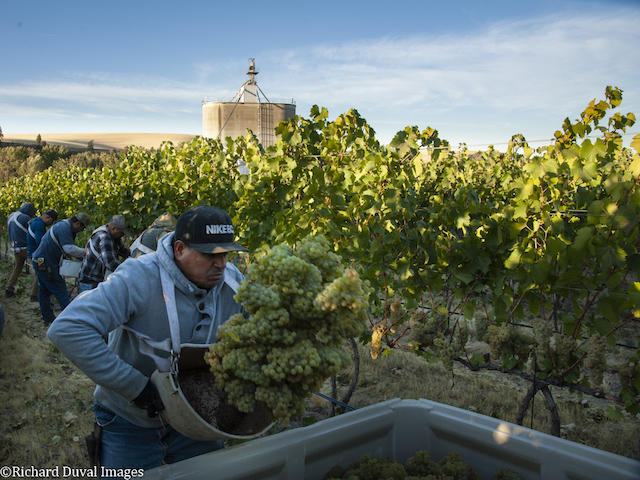 richard duval images 09 25 18 0371 - Photojournalist takes lens to Pacific Northwest 2018 harvest