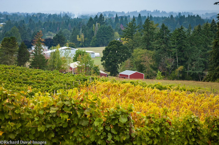 richard duval images 10 07 18 2971 - Photojournalist takes lens to Pacific Northwest 2018 harvest