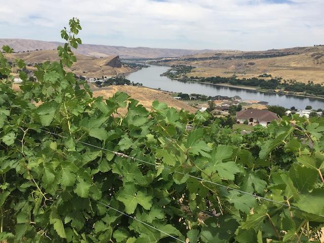 wasem vineyard lewis clark valley april 2017 - College Cellars of Walla Walla again tops Tri-Cities Wine Festival judging