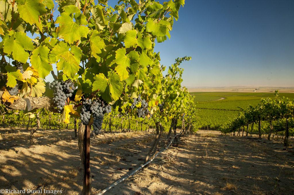 Coyote Canyon Vineyards