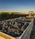 09 26 18 2432 120x134 - Cabernet Sauvignon production grows by 29 percent in Washington wine industry