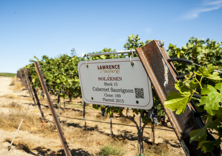 lawrence vineyards planting richard duval images - Cabernet Sauvignon production grows by 29 percent in Washington wine industry