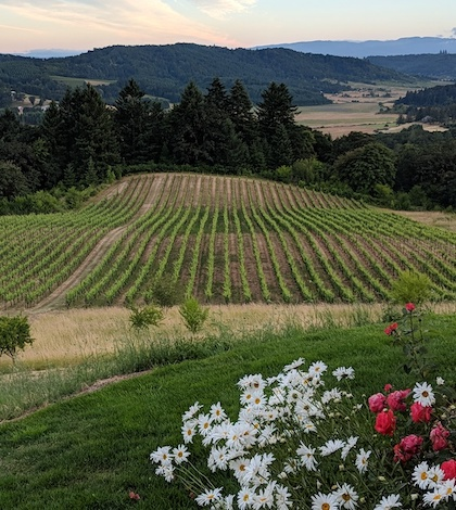Youngberg Hill Vineyard feature