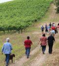 k9hike 120x134 - K-9 Vineyard Hike at Reustle-Prayer Rock Vineyards