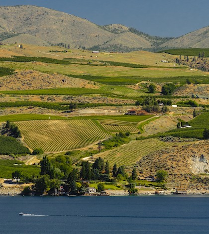 The vineyards of the Lake Chelan AVA in Washington