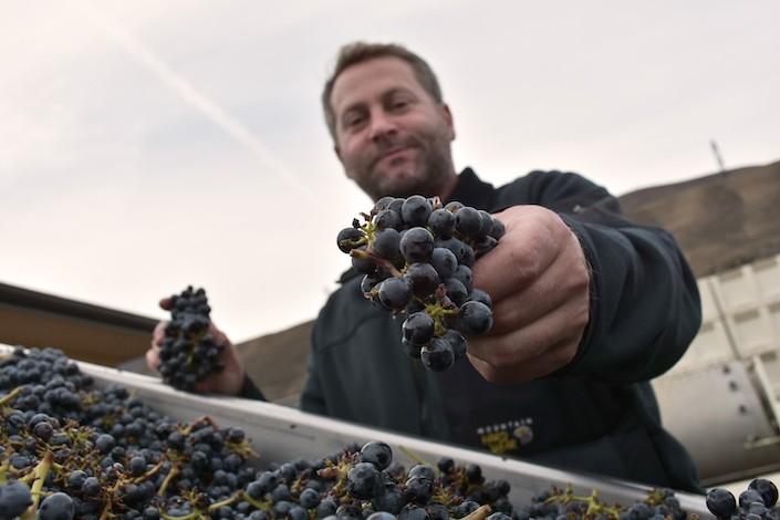 richard batcheolor crush pad maryhill winery - Maryhill, Gehringer Bros. stand tall at INDY International judging