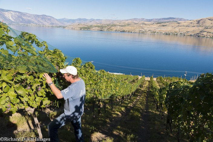 mellisoni vineyards grapes 16 richard duval images - Apples to grapes: The path to the Lake Chelan AVA