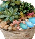 OK 120x134 - PlantNite at Oak Knoll Winery - Natural Birch Planter with Succulents