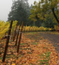 StyringAutumnSq 120x134 - Styring Vineyards 2019 Thanksgiving Weekend Open House