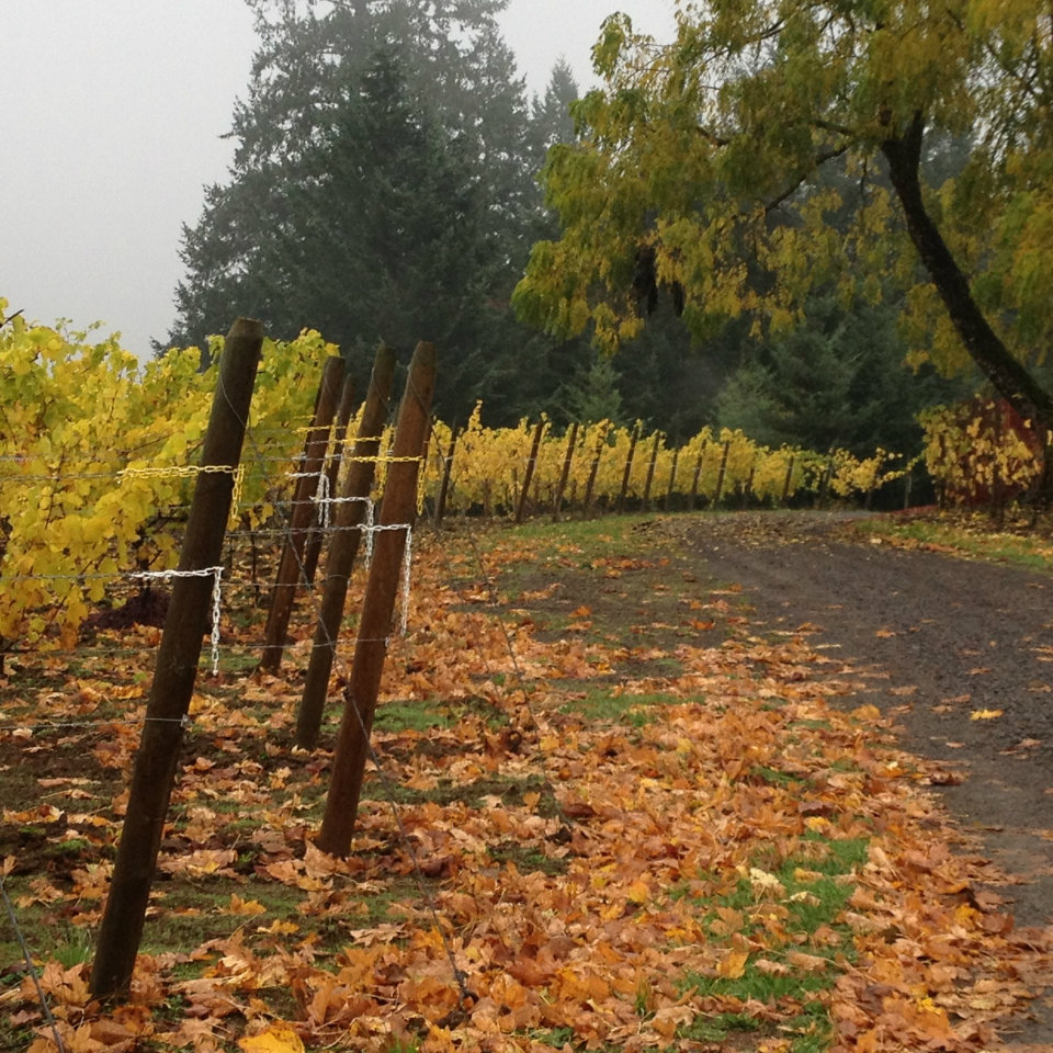 StyringAutumnSq - Styring Vineyards 2019 Thanksgiving Weekend Open House